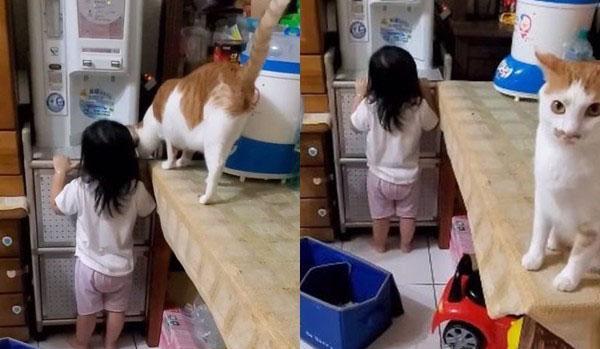 """铲屎官罚站自己的女儿不到三分钟,家里的橘猫上前安慰,无效后向铲屎官发出橘式""""警告""""插图(4)"""
