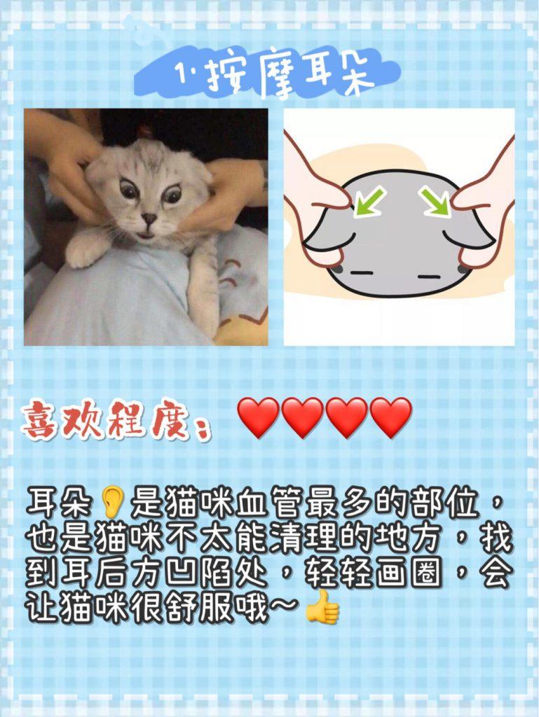猫咪按摩手法技巧!让猫咪爱上你插图(5)