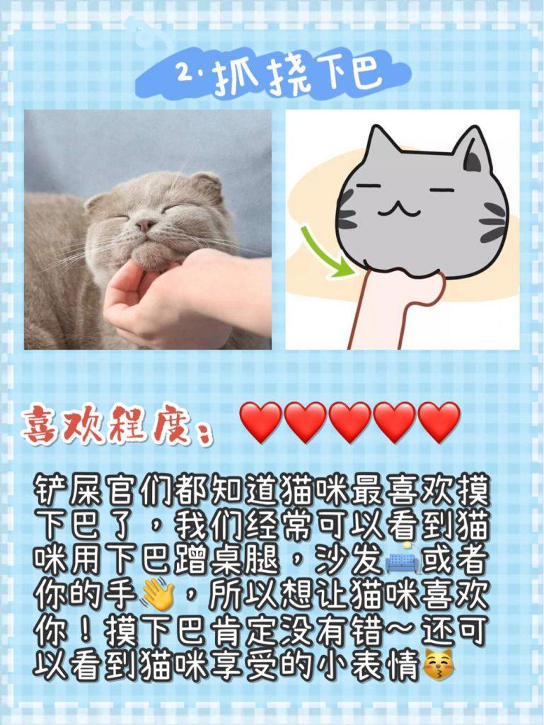 猫咪按摩手法技巧!让猫咪爱上你插图(4)