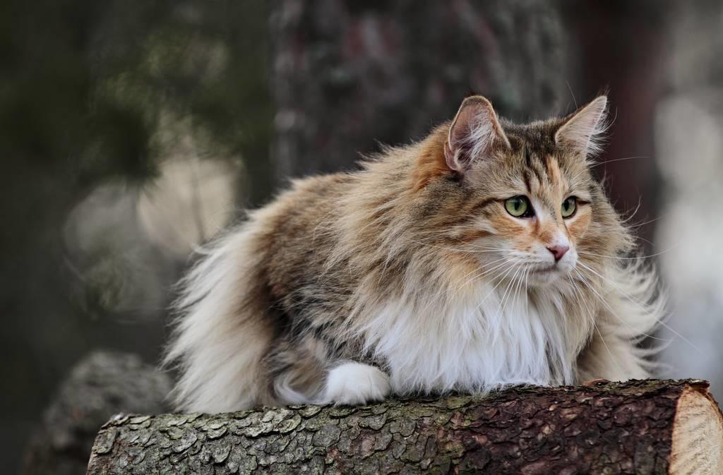关于猫的一些趣事:作为铲屎的猫奴,你要知道的96条养猫趣事插图(1)