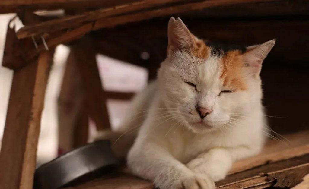 1分钟带你看完猫咪的一生插图(9)