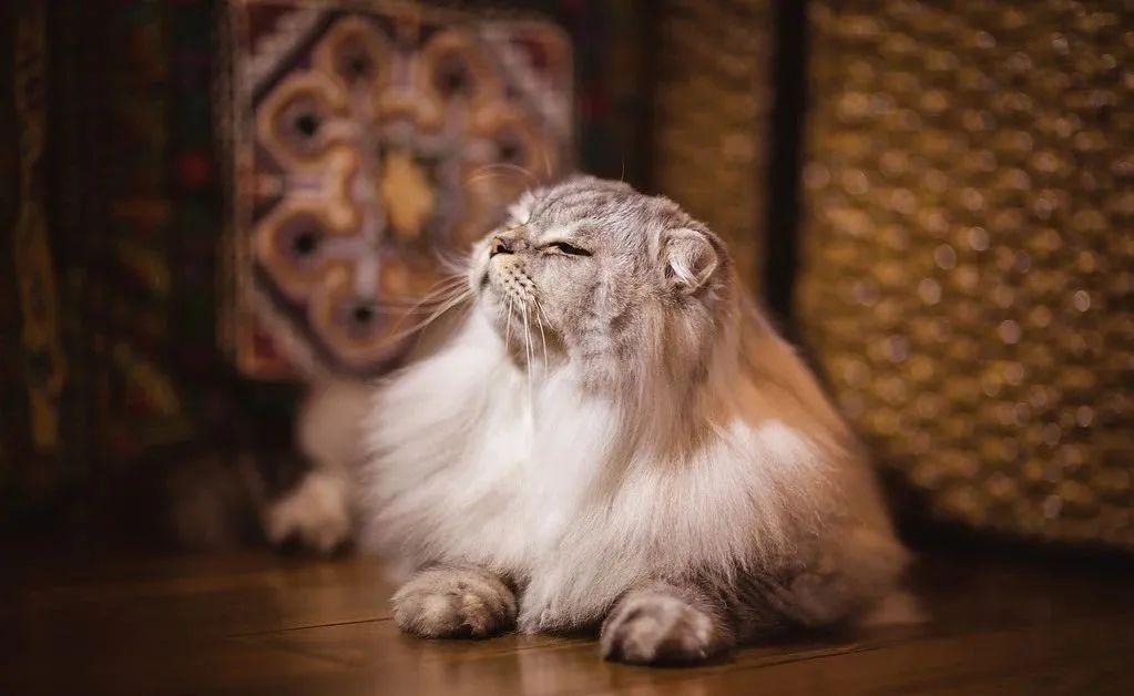 1分钟带你看完猫咪的一生插图(10)