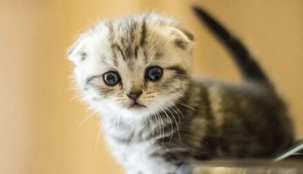 1分钟带你看完猫咪的一生插图(1)