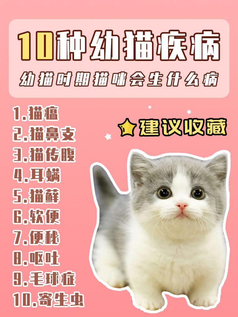 幼猫常见疾病办法预防|新手养猫必看插图