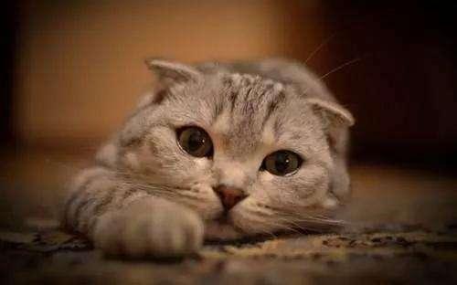 如何避免买到星期猫??反套路猫贩子插图