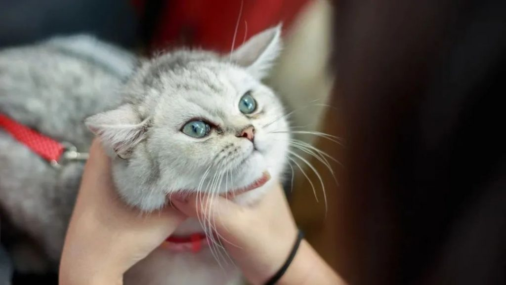 1分钟带你看完猫咪的一生插图(3)