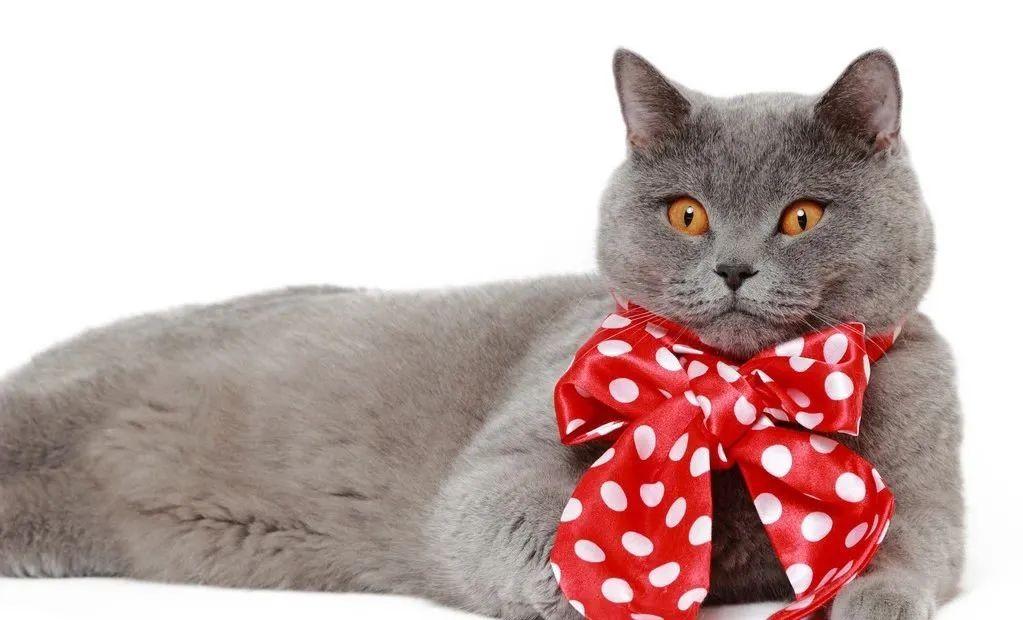 1分钟带你看完猫咪的一生插图(4)