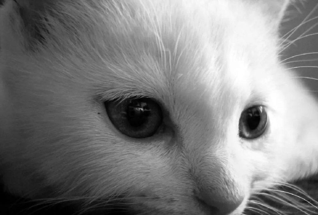 1分钟带你看完猫咪的一生插图(5)