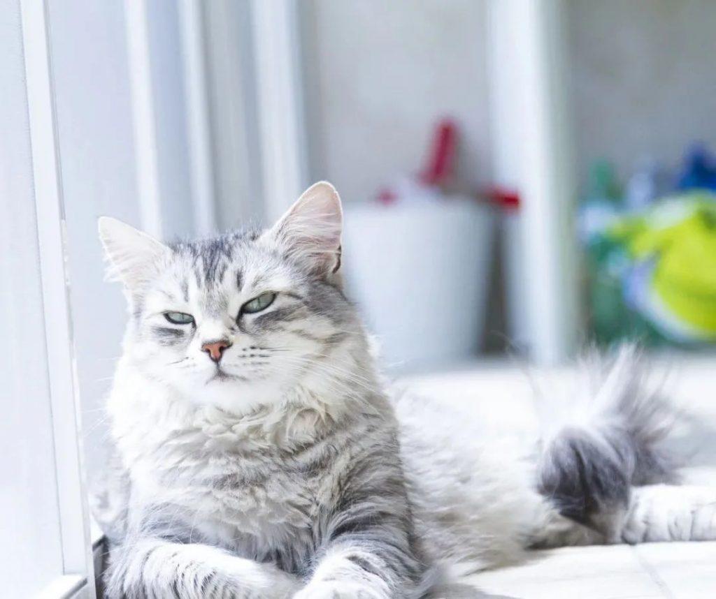 1分钟带你看完猫咪的一生插图(6)