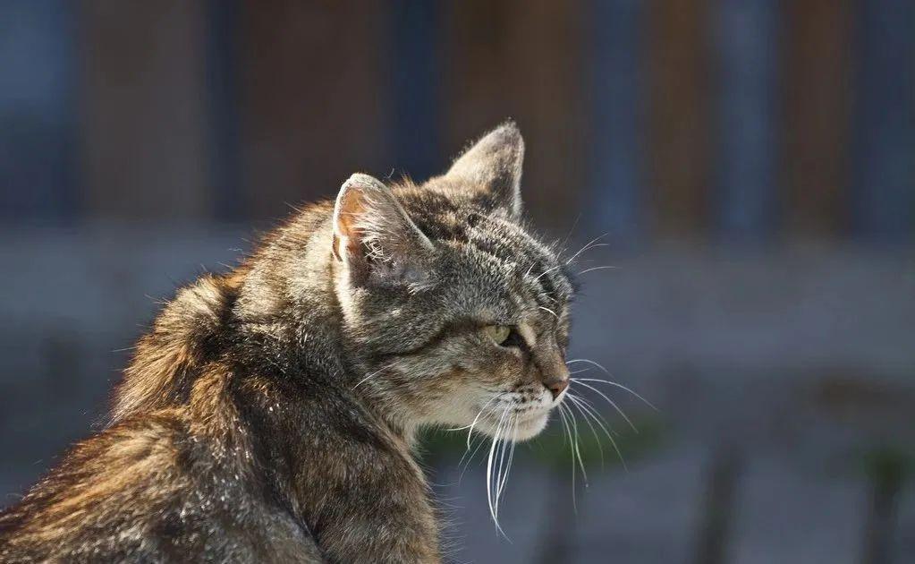 1分钟带你看完猫咪的一生插图(8)