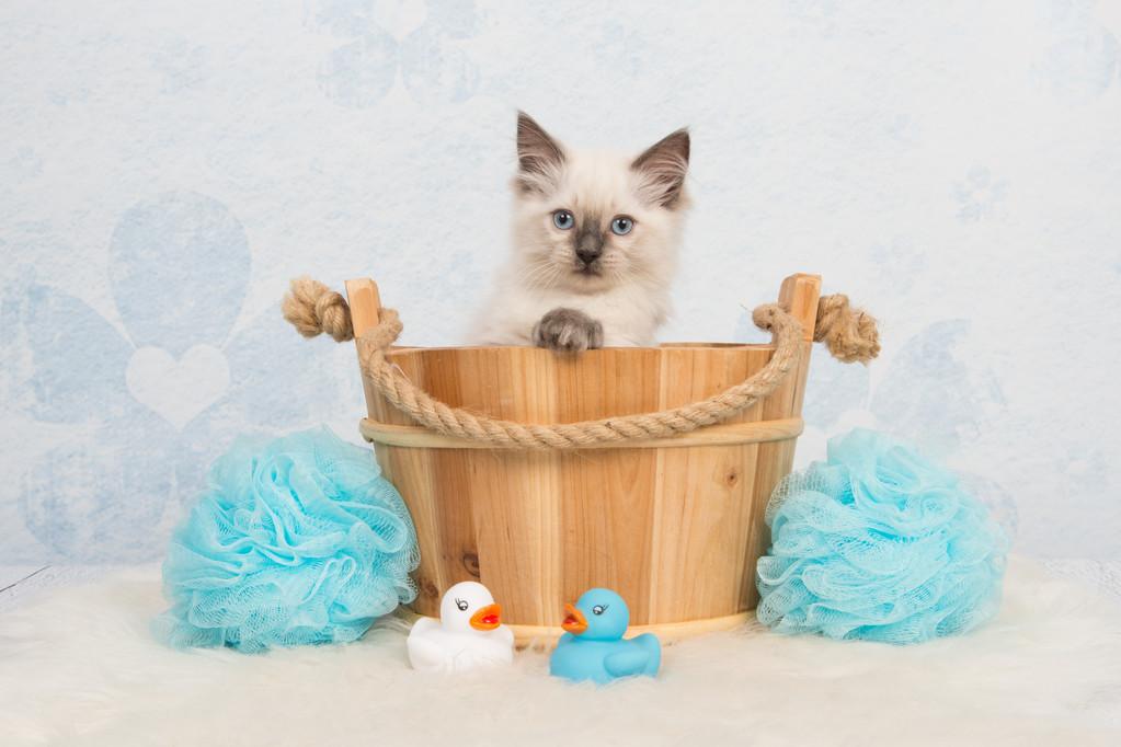 关于猫的一些趣事:作为铲屎的猫奴,你要知道的96条养猫趣事插图(8)