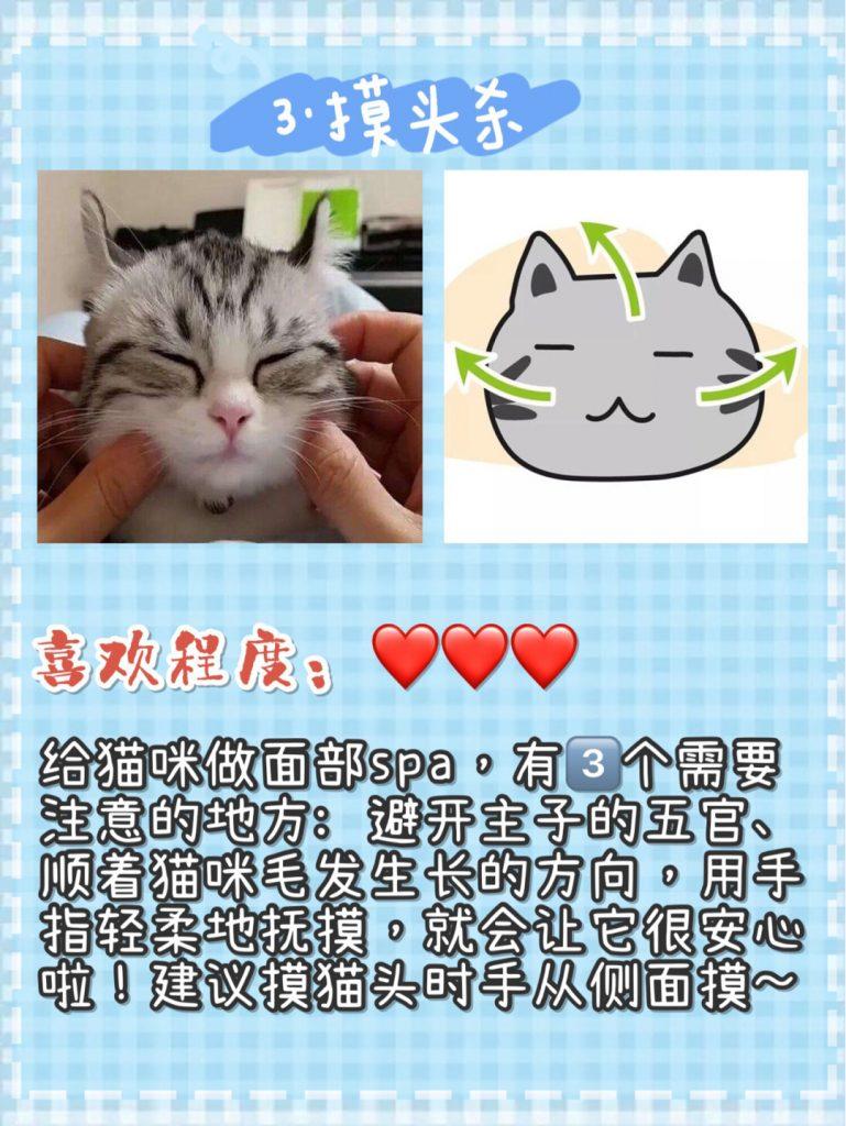 猫咪按摩手法技巧!让猫咪爱上你插图(3)
