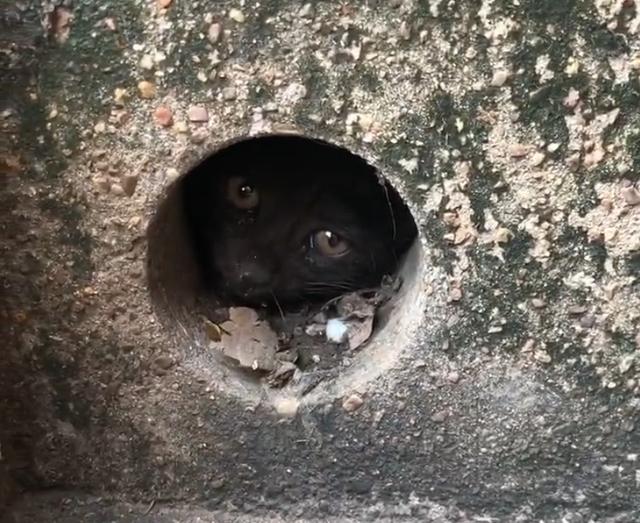 小流浪猫被卡下水管,进退两难,但它那求生的眼神,太震撼人心插图(2)