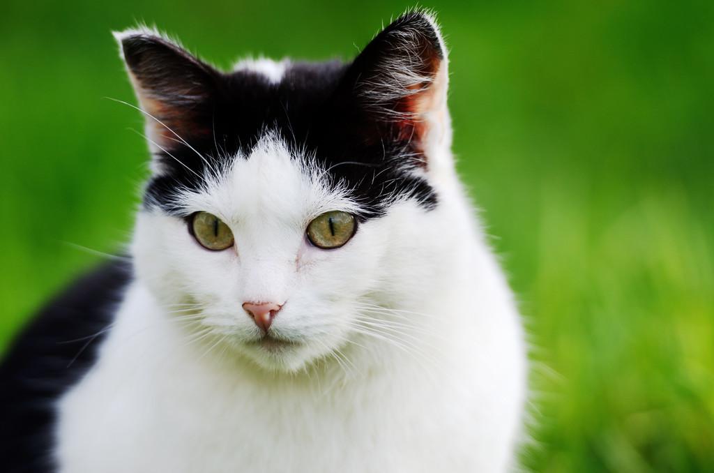 关于猫的一些趣事:作为铲屎的猫奴,你要知道的96条养猫趣事插图(2)