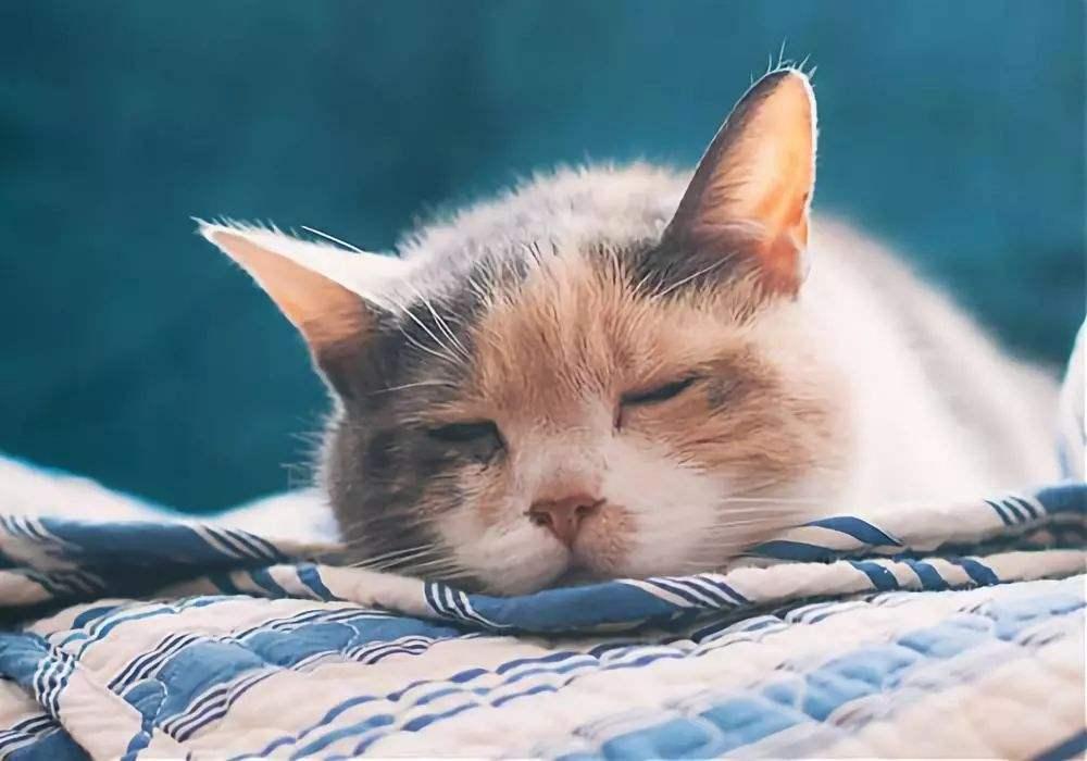 新手养猫|猫咪常见疾病自查,超实用插图