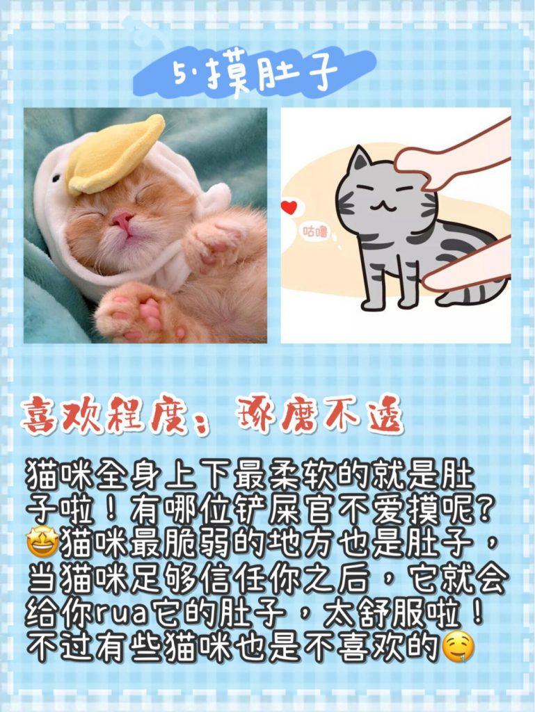 猫咪按摩手法技巧!让猫咪爱上你插图(1)