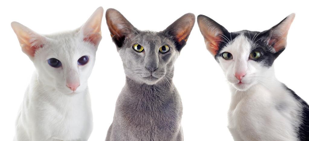 关于猫的一些趣事:作为铲屎的猫奴,你要知道的96条养猫趣事插图(3)