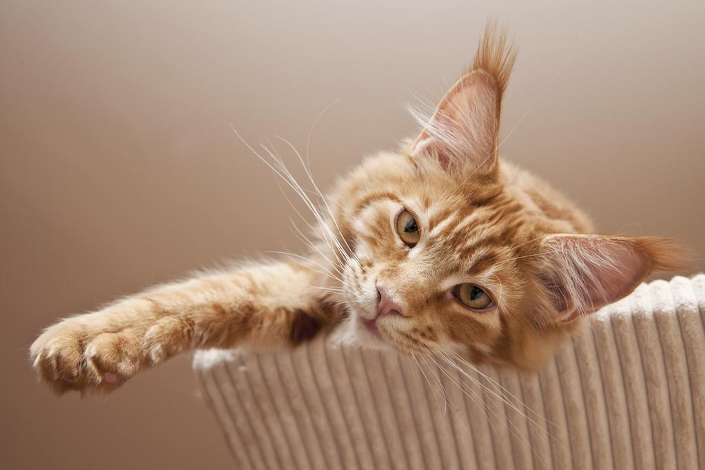 关于猫的一些趣事:作为铲屎的猫奴,你要知道的96条养猫趣事插图(6)