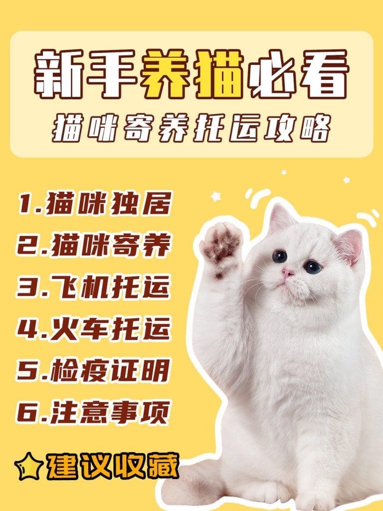 十一假期猫咪寄养|托运新手养猫攻略插图