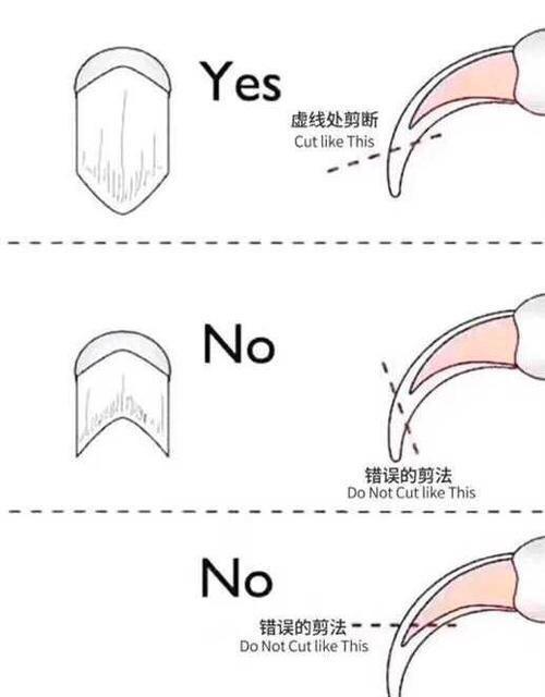如何正确的给猫咪剪指甲插图