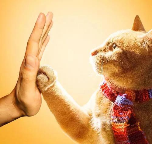 欧洲一只流浪猫的传奇故事插图