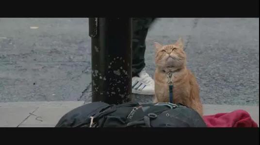 欧洲一只流浪猫的传奇故事插图(1)