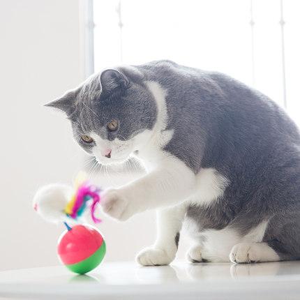 猫咪最喜欢的几种玩具,你都备齐了吗?插图(6)