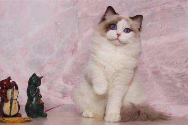 养猫必看|对猫咪有毒的15种常见植物插图(1)