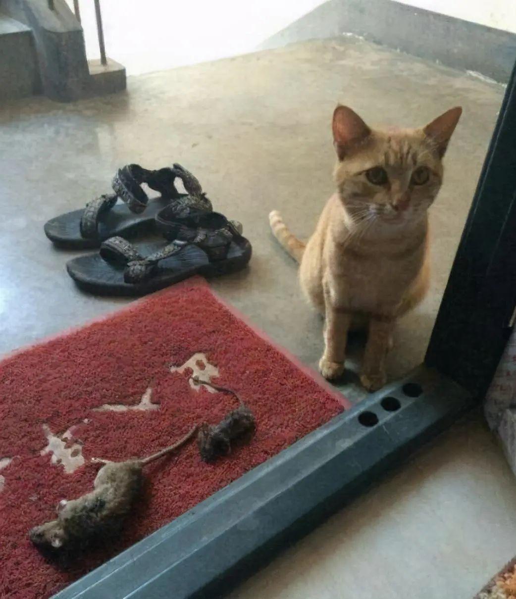 其实猫能听懂自己的名字!它只是懒得搭理你插图(1)
