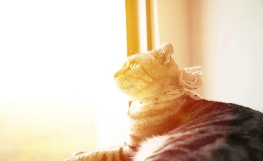 养猫的20个终极指南,养猫达人必备!插图(17)