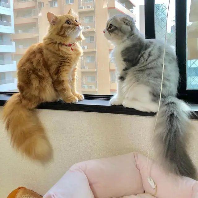 猫咪为什么会得猫藓,什么原因造成的,怎么治疗插图(1)