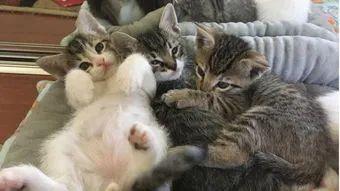 教你如何训练幼猫培养良好的性格插图(4)
