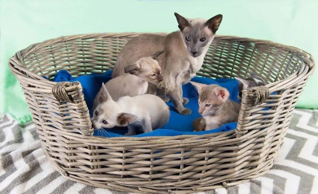 养猫的20个终极指南,养猫达人必备!插图(5)