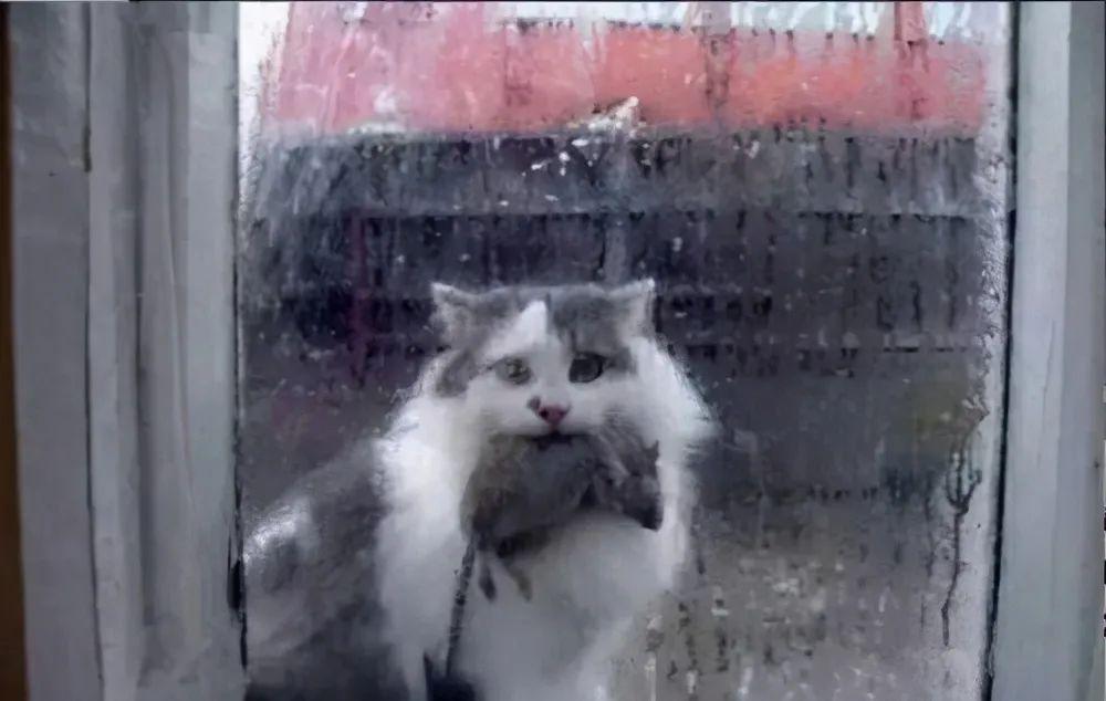 其实猫能听懂自己的名字!它只是懒得搭理你插图(2)