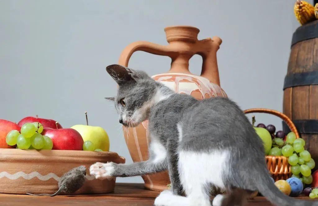 养猫的20个终极指南,养猫达人必备!插图(15)