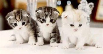 教你如何训练幼猫培养良好的性格插图(3)