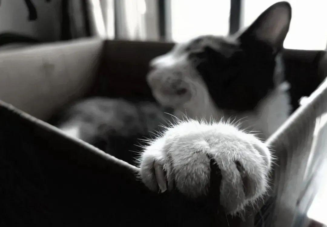 养猫的20个终极指南,养猫达人必备!插图(9)