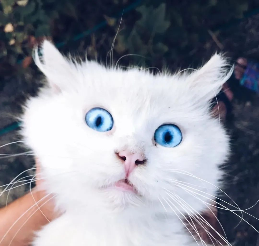 养猫的20个终极指南,养猫达人必备!插图(21)