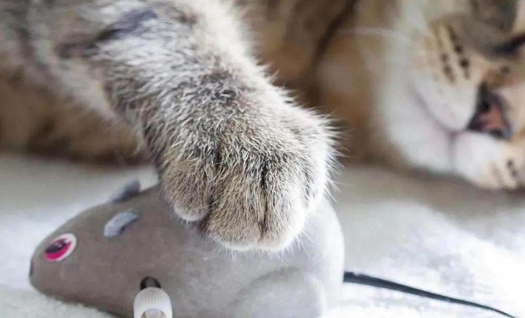 养猫的20个终极指南,养猫达人必备!插图(8)