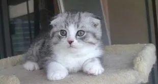 教你如何训练幼猫培养良好的性格插图