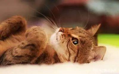 猫全身发抖是怎么回事,站不起来了怎么办,是什么原因引起的插图