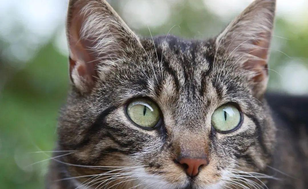 养猫的20个终极指南,养猫达人必备!插图(19)