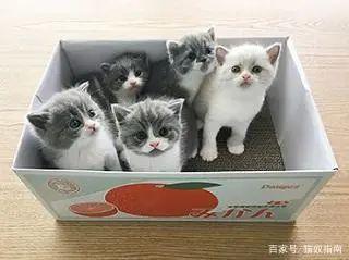 猫全身发抖是怎么回事,站不起来了怎么办,是什么原因引起的插图(2)