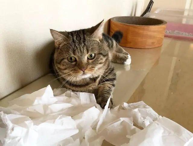 猫咪为什么会得猫藓,什么原因造成的,怎么治疗插图(3)