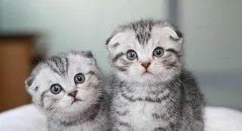 教你如何训练幼猫培养良好的性格插图(1)