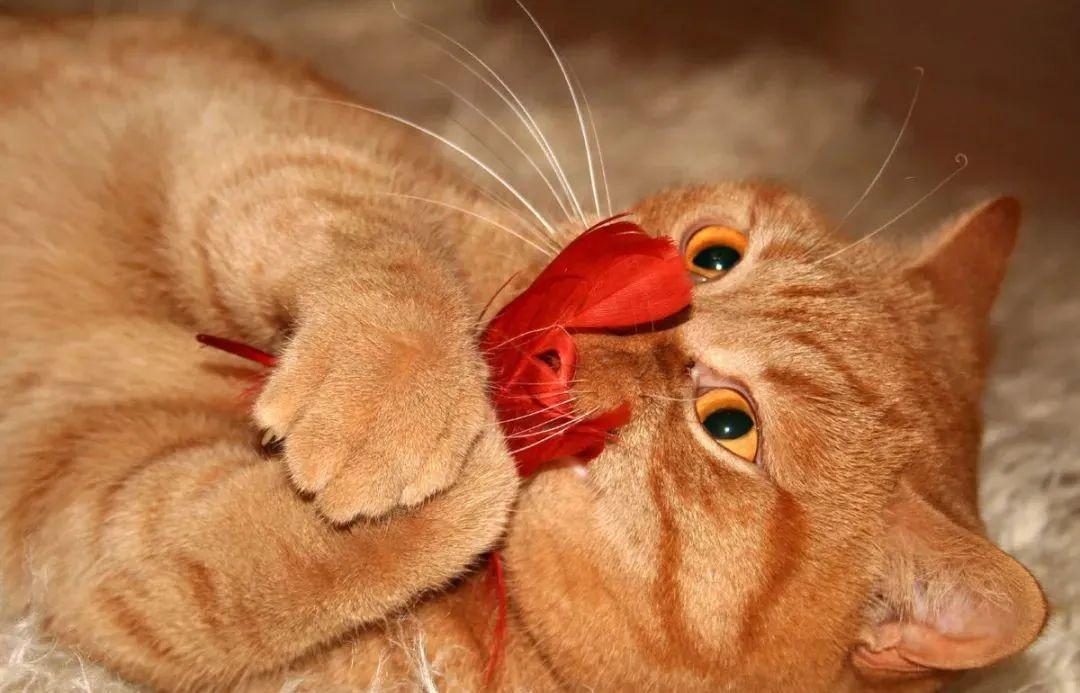养猫的20个终极指南,养猫达人必备!插图(1)