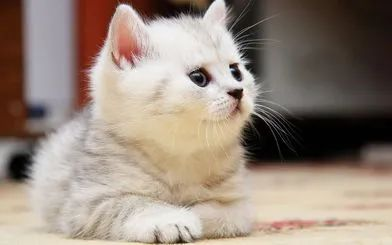 教你如何训练幼猫培养良好的性格插图(2)