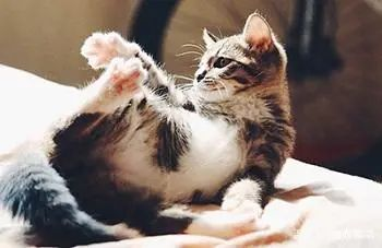 猫全身发抖是怎么回事,站不起来了怎么办,是什么原因引起的插图(3)