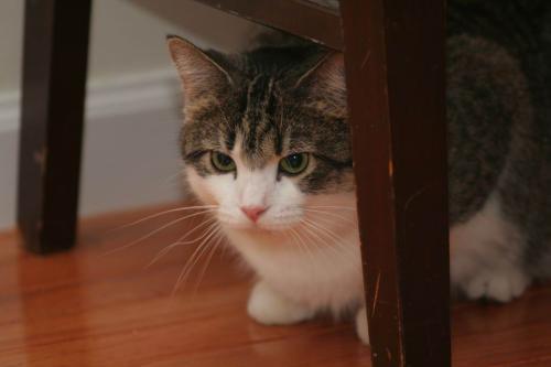 新猫到家胆小怕人?如何培养它的好性格插图(1)