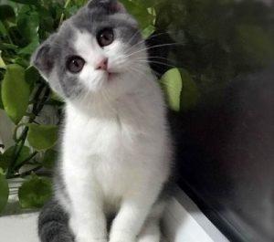 猫全身发抖是怎么回事,站不起来了怎么办,是什么原因引起的插图(4)